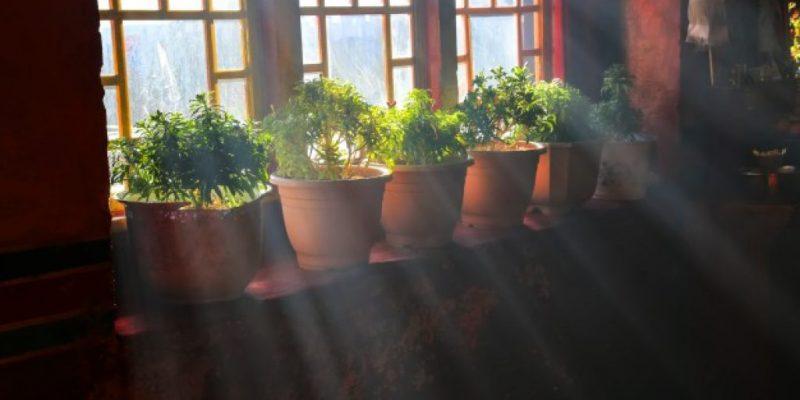 Choisir ses plantes d'intérieur